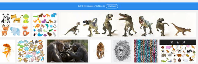 adobe stock photos
